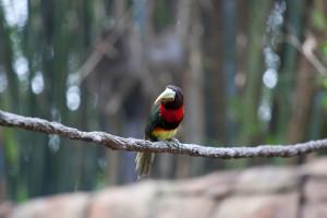 bird on a branch hd