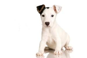 black white pup images