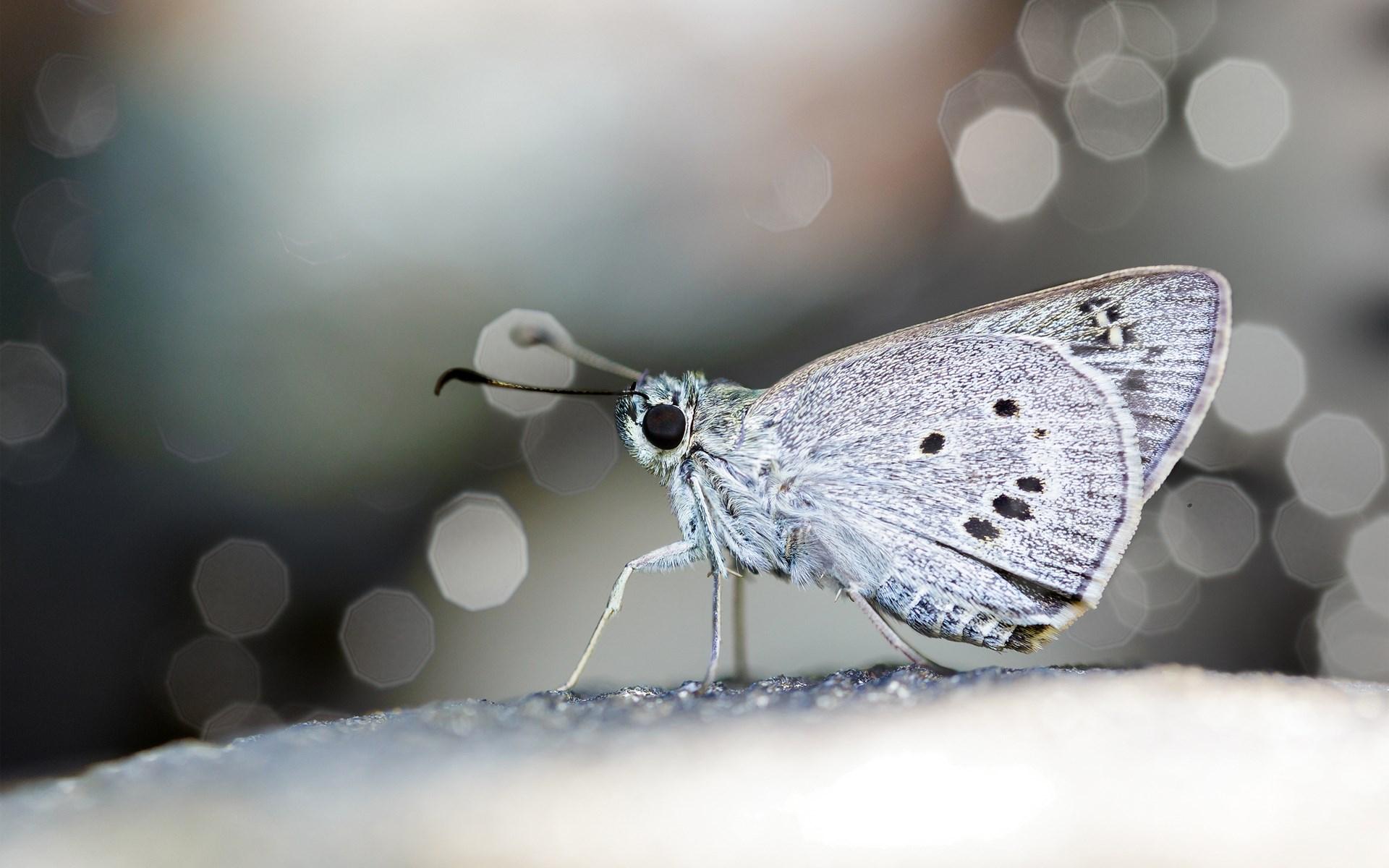 Butterfly Wings Full Hd 1080p Hd Desktop Wallpapers 4k Hd
