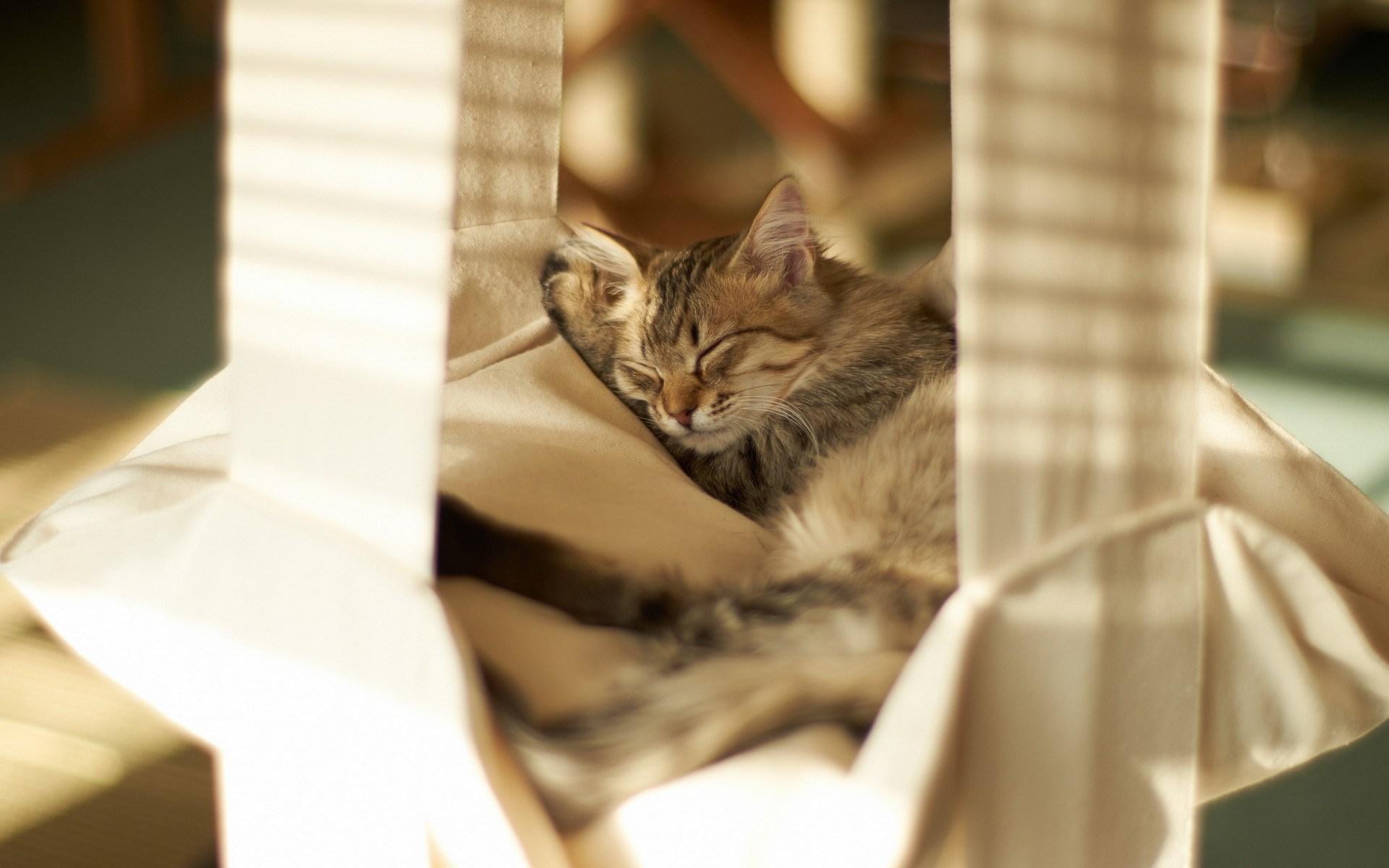 cat cute sleep