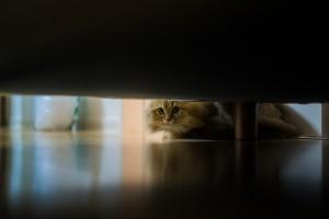 cat funnt pic