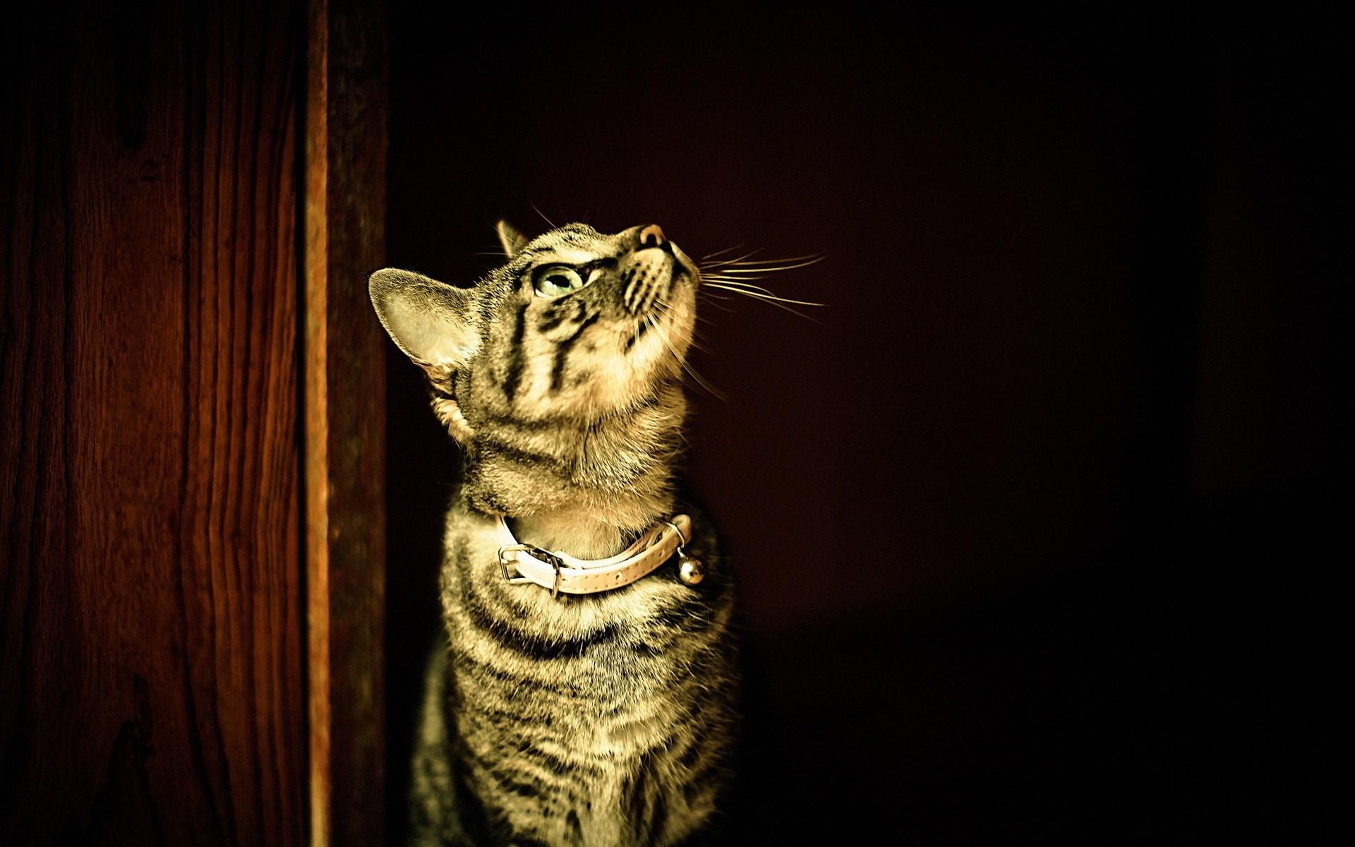 cat look wallpaper