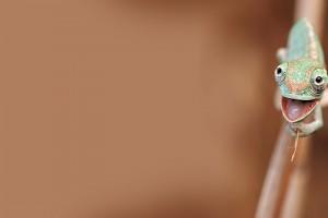 chameleon iphone 7004724-cute-little-