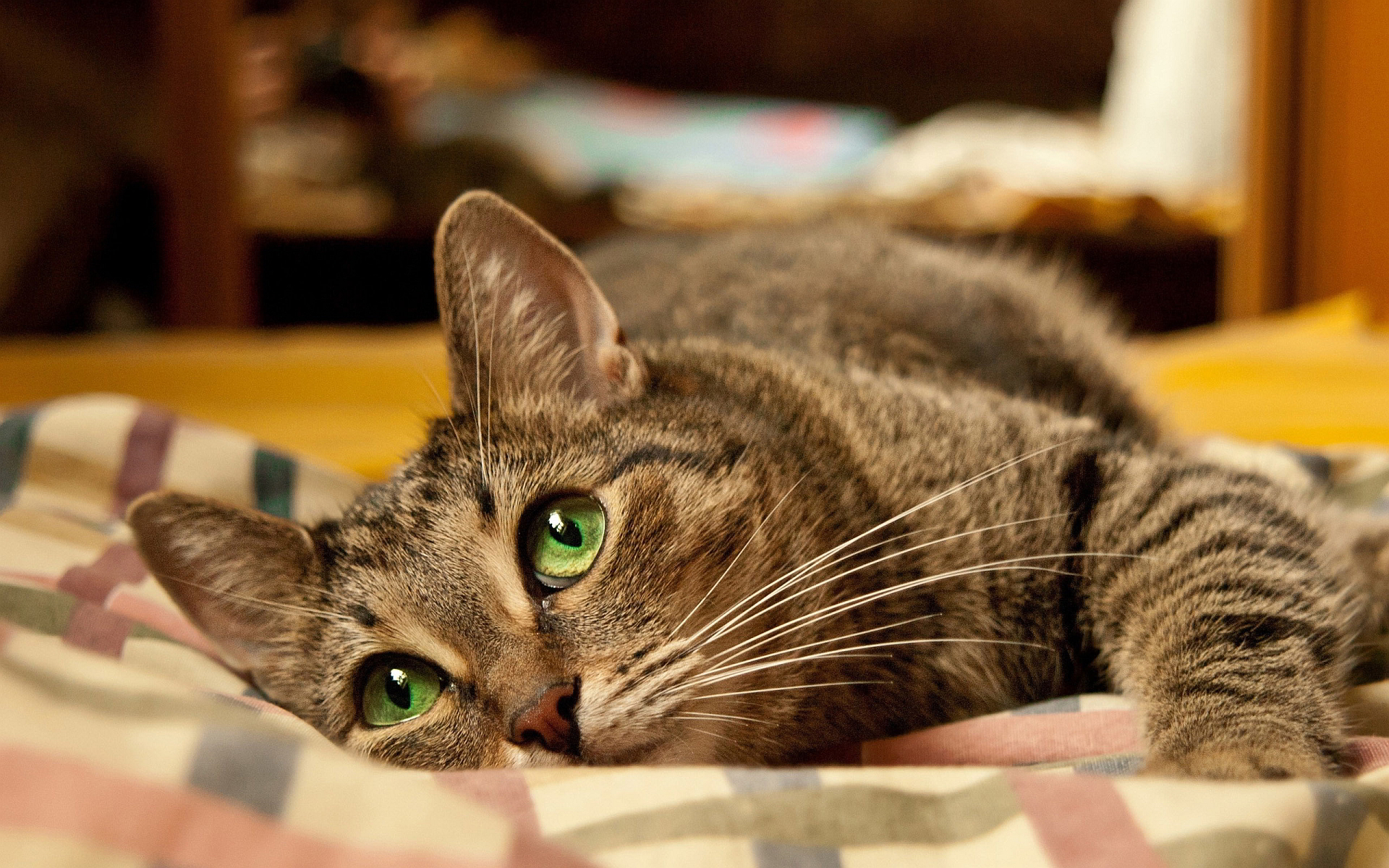 cute cat android wallpaper - HD Desktop Wallpapers   4k HD
