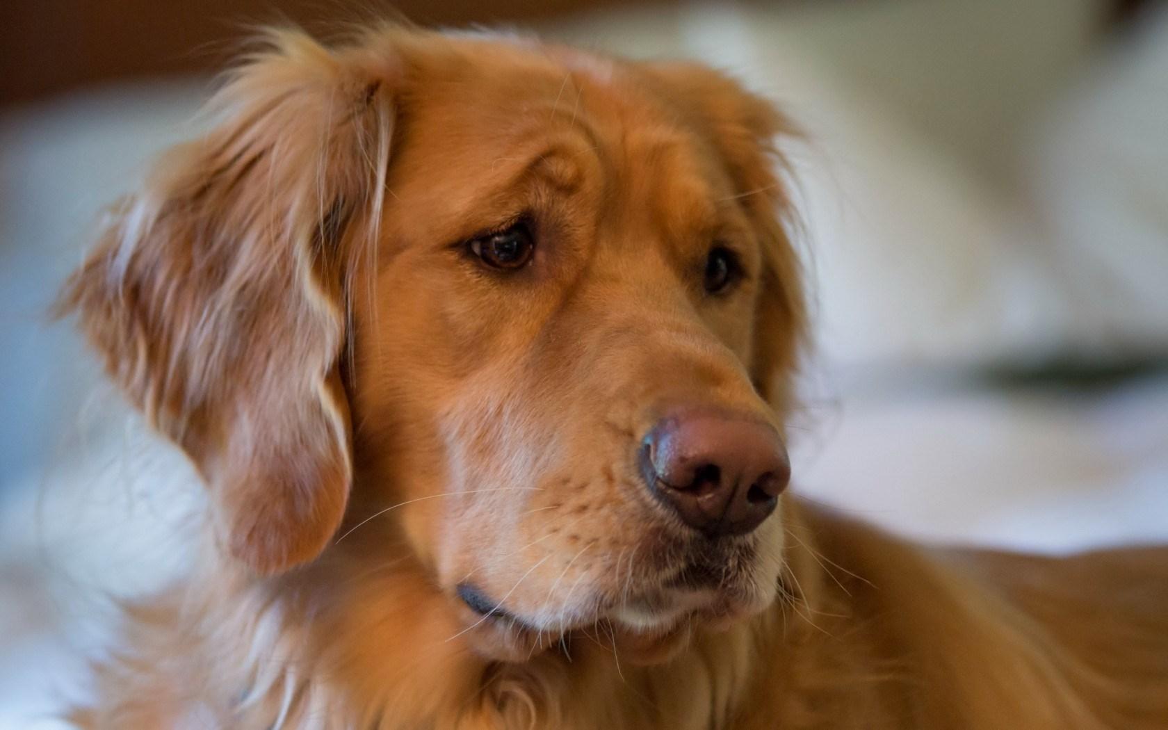 dog cute look