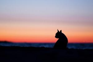 dog wallpaper sunset
