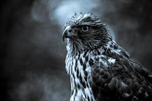 eagle pc download