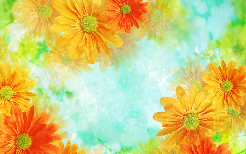 flowers background orange