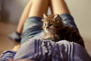 fluffy kitten on a girl
