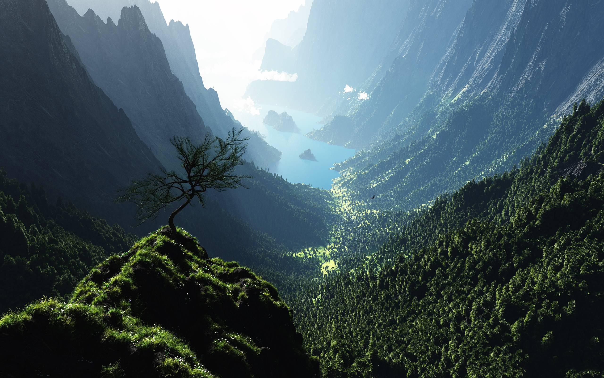 forest panorama - HD Desktop Wallpapers | 4k HD