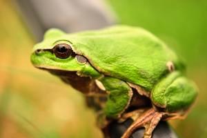 frog photography wild