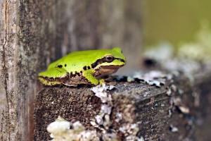 frog wildlife