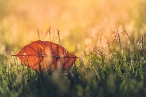 grass wallpaper leaf photography