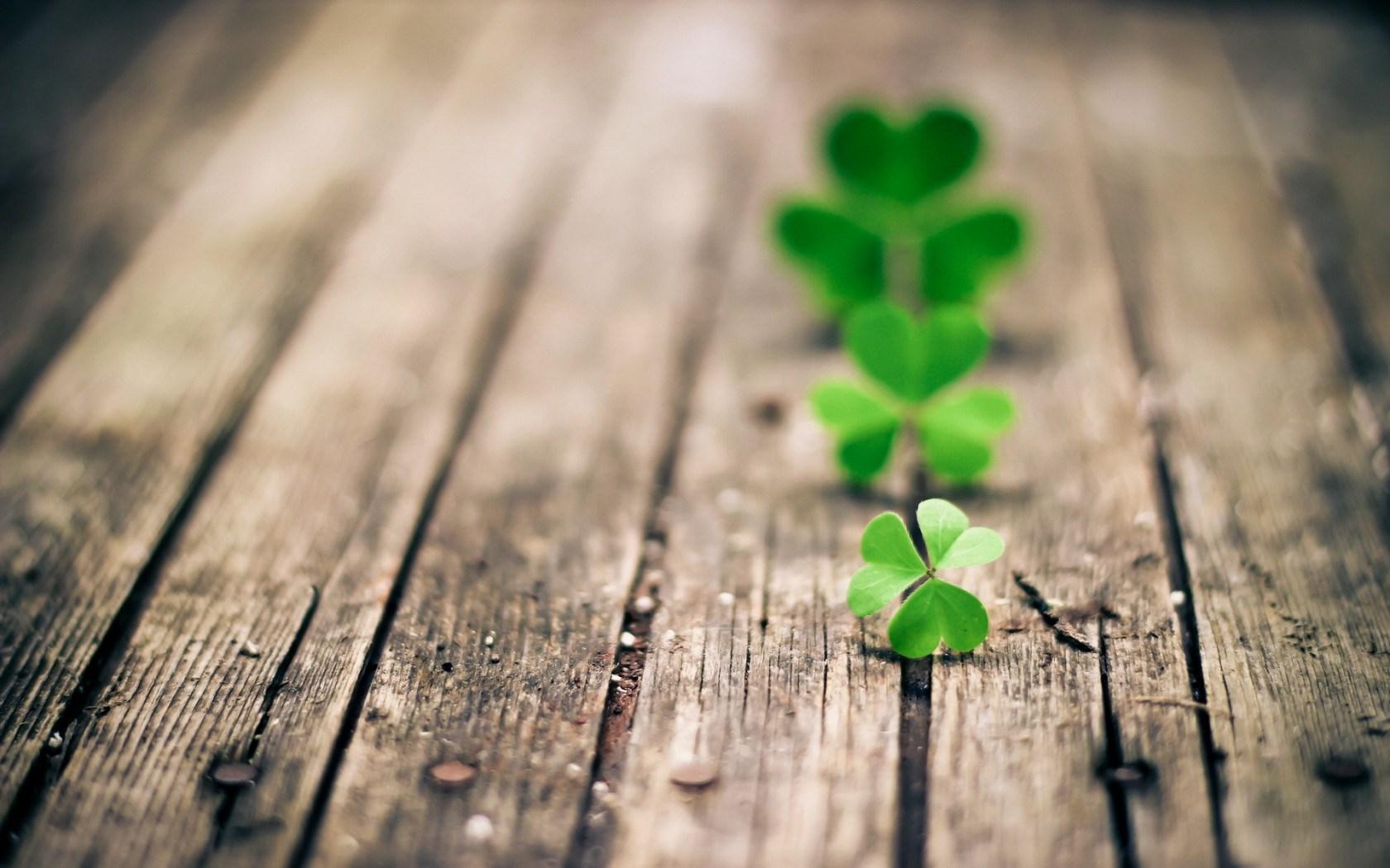 green clover beautiful