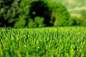 green lawn wallpaper