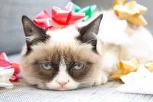 grumpy funny cat