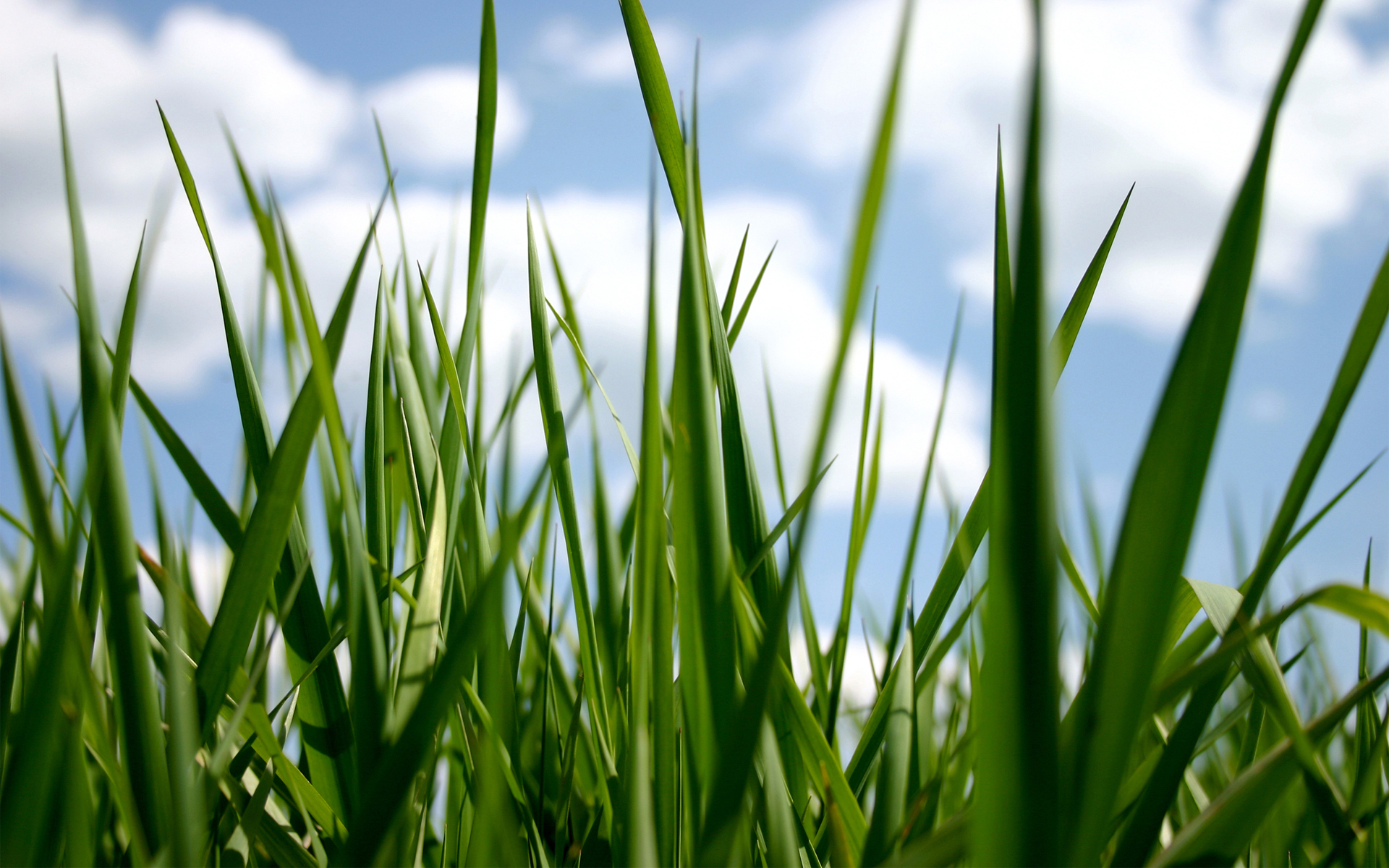 hd grass wallpaper