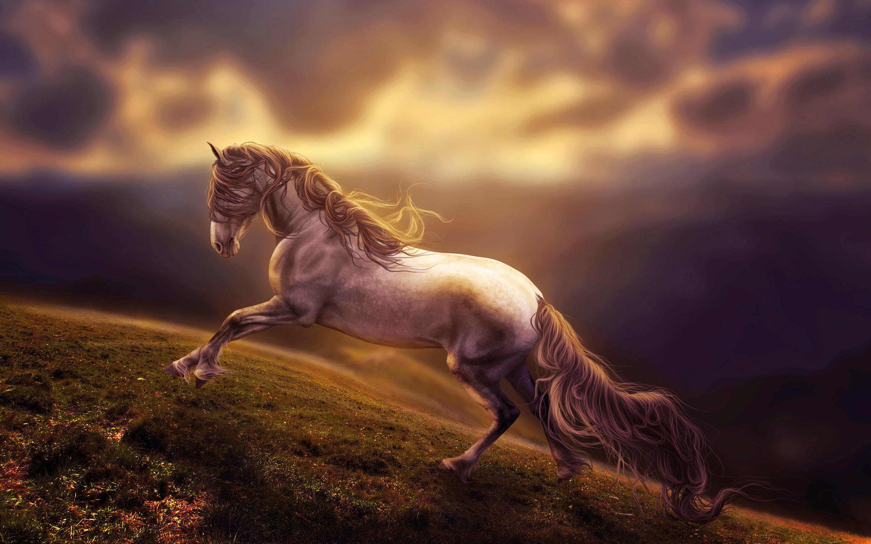 Horse Images Wallpaper - Hd Desktop Wallpapers  4K Hd-1571