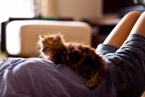 kitten animal