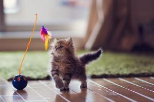kitten cool wallpaper