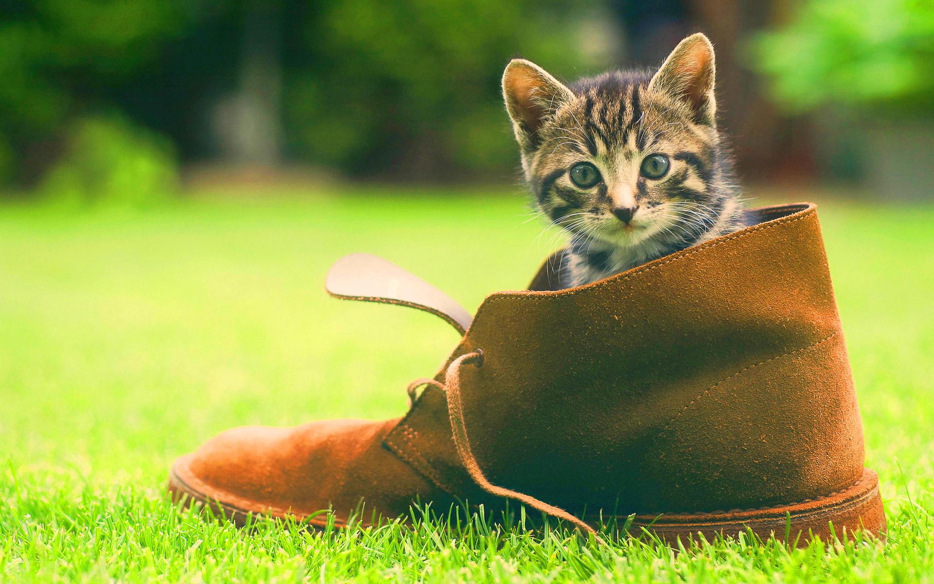 kitten cute wallpaper shoe - HD Desktop Wallpapers | 4k HD