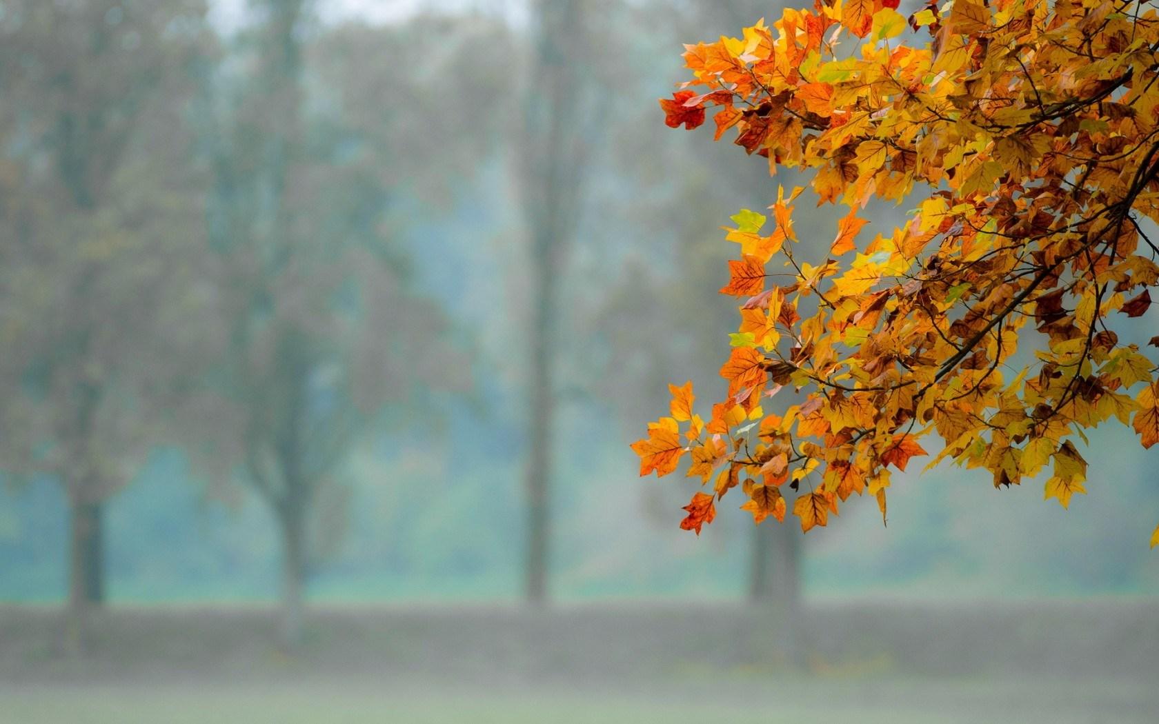 leaves autumn wallpaper - HD Desktop Wallpapers | 4k HD