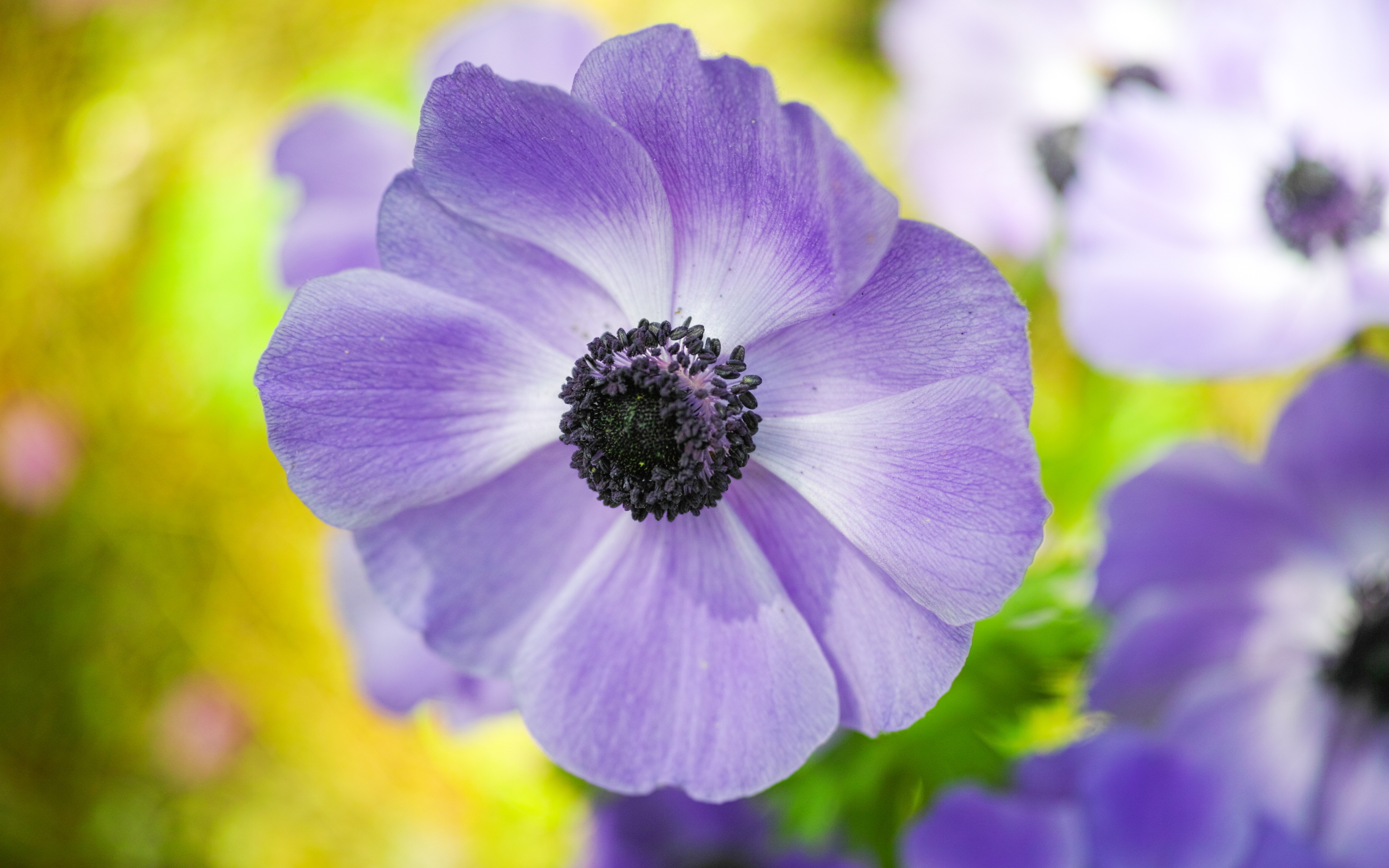 lilac colored flower