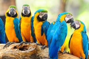 macaw parrots beautiful
