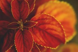 macro pictures orange red