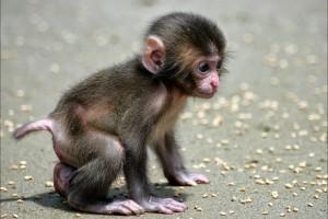 monkey cute little kid