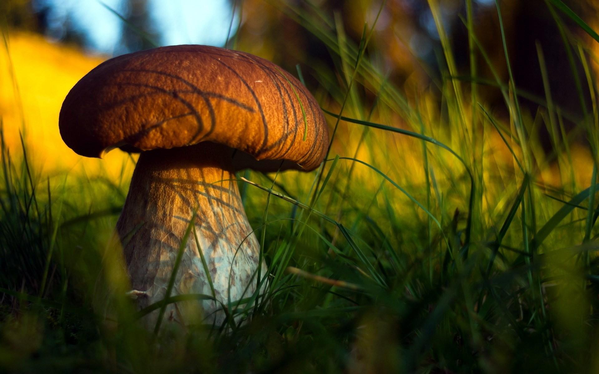 mushroom family wallpaper desktop - photo #13