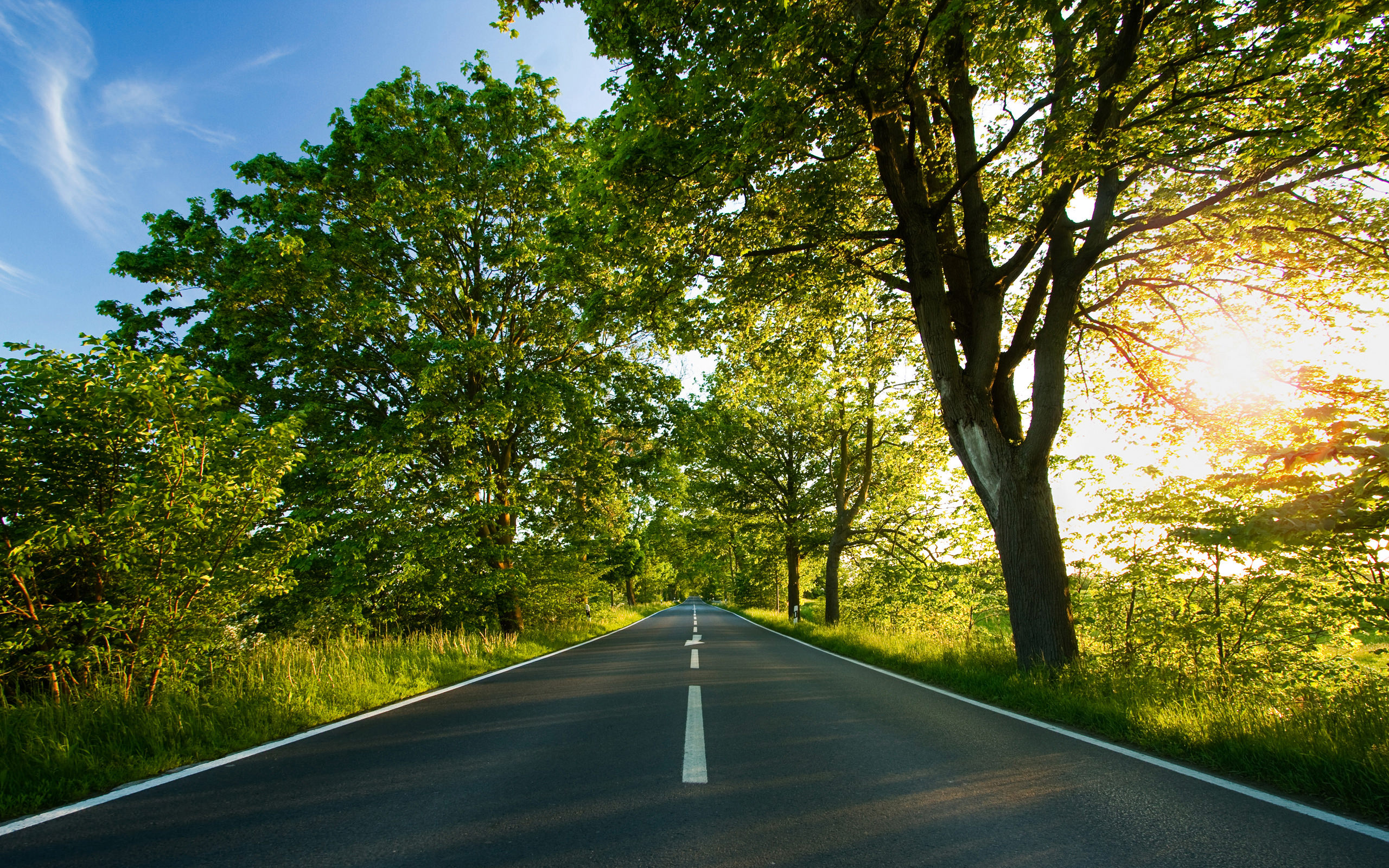 nature path background download