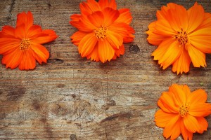 orange flowers free download
