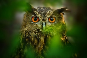 owl eyes brown wallpaper