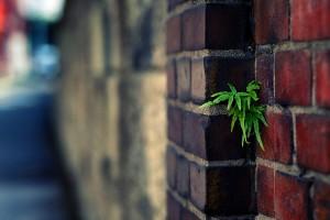 plant wallpaper urban brick