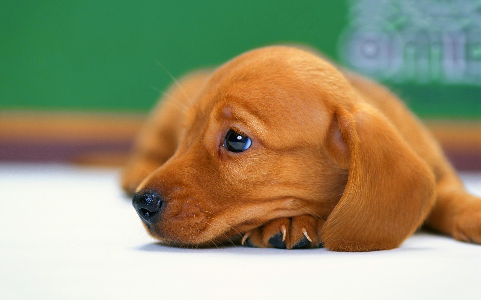 puppy bored
