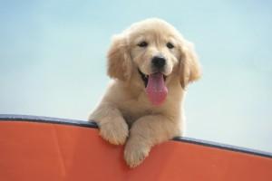 puppy cute download