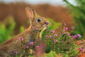 rabbit wonderful