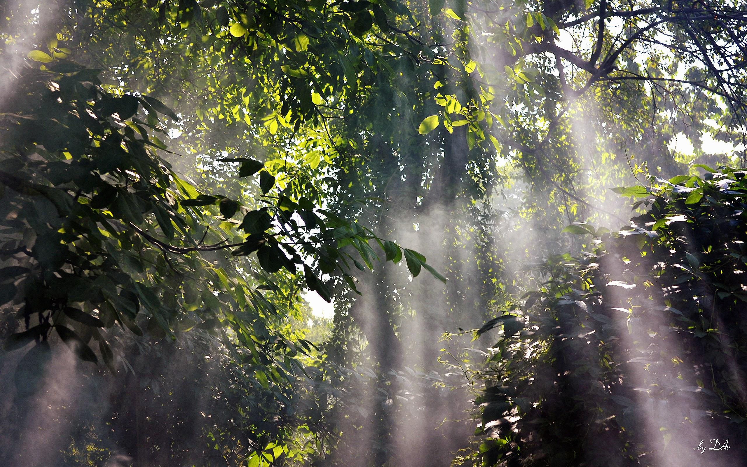 Beautiful rainforests wallpapers