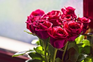red roses bunch cool