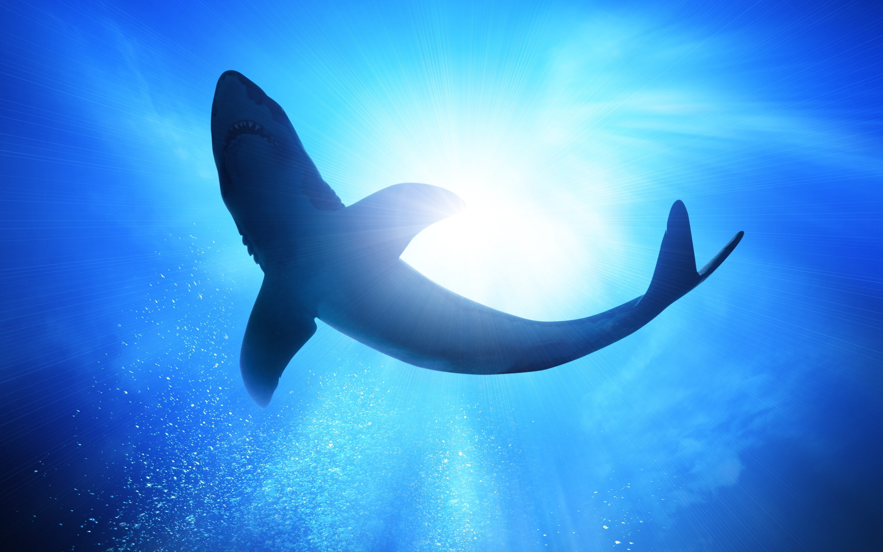 download wallpaper shark 1600 - photo #15