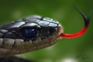snake pc wallpaper