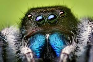 spider wallpaper cool