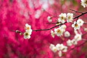 spring wallpaper white