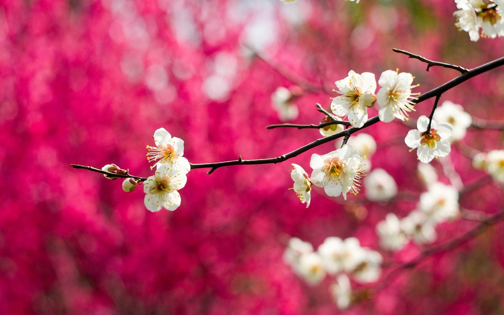 spring wallpaper white - HD Desktop Wallpapers | 4k HD