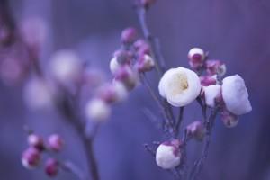 springtime images
