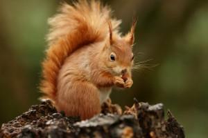 squirrel wallpaper cute