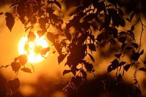sunset wallpapers twigs