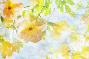 sunshine wallpaper flowers