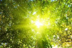 sunshine wallpaper treetop